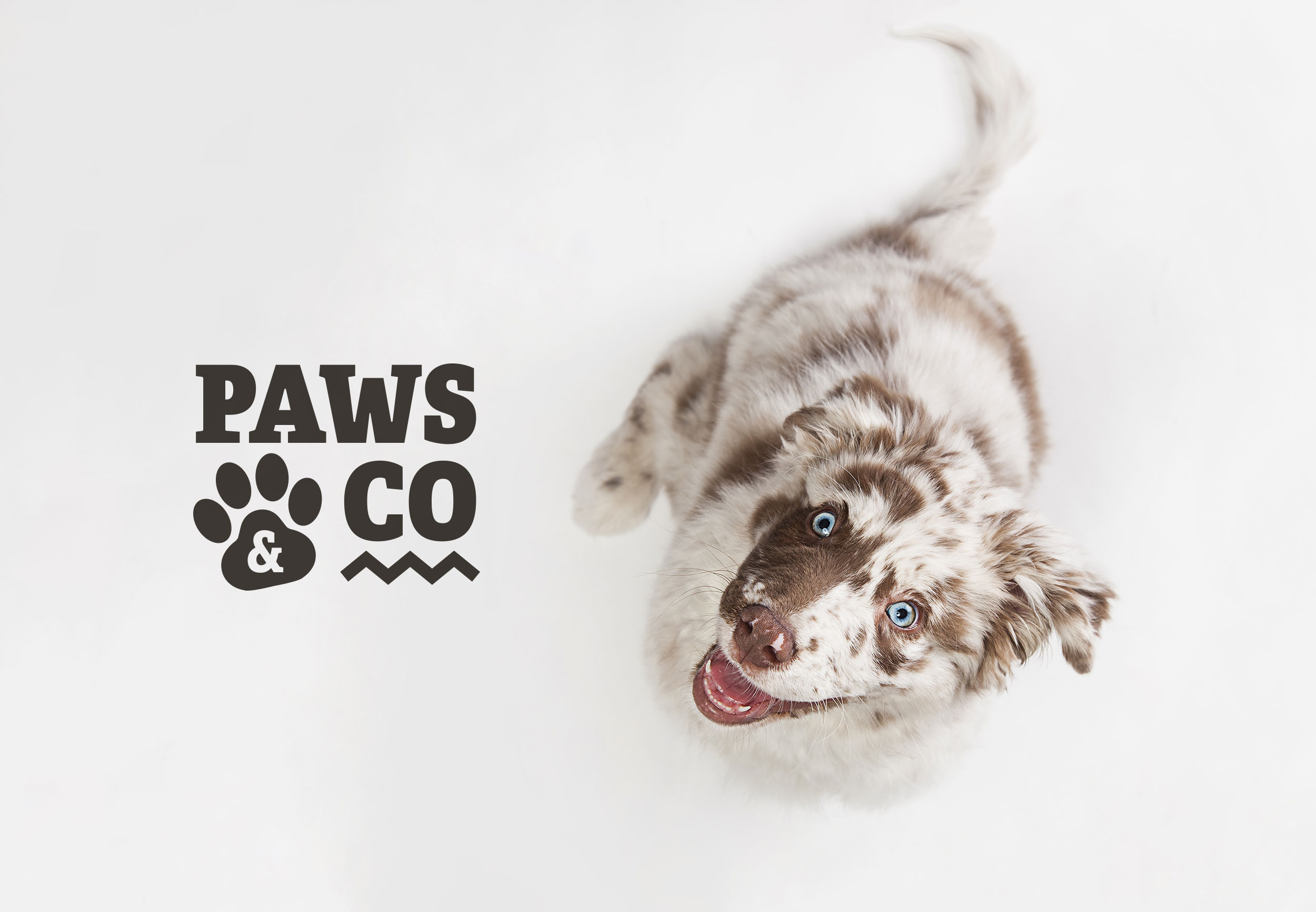Paws & Co Supplements Ad
